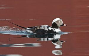 Finland birding