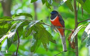 Indian birding tours
