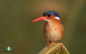Botswana birding tours