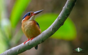 Comoros birding tours