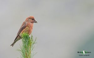 Romania birding tours