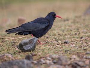 Morrocco birding tours