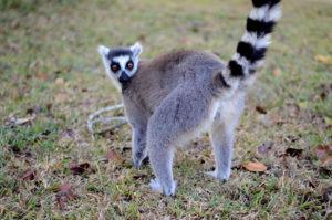 Madagascar birding tours