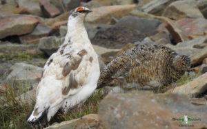 Norway birding tours