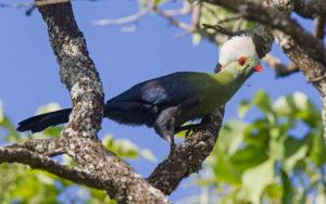 Ethiopia birding tours