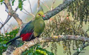 African birding tours