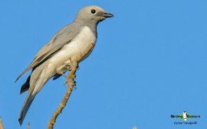 Zambia birding tours
