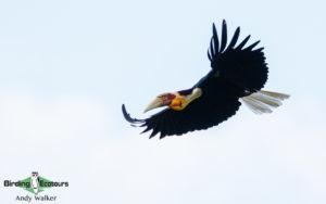 Thailand birding tours