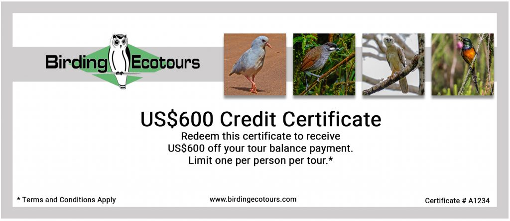 Please fill in the form at the bottom of this page to join Bird Miles. After submitting the form, you will be given more info about the US$600 Credit Certificate.