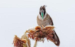 Bogota and Medellin birding tour