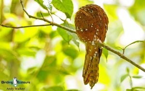 Guyana Trip Report