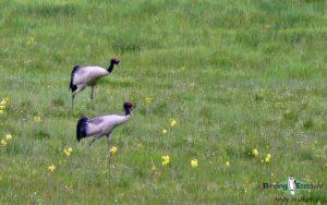 Indian Subcontinent birding