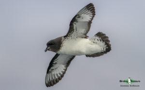 Pelagic birding trips