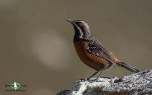 Africa birding galleries