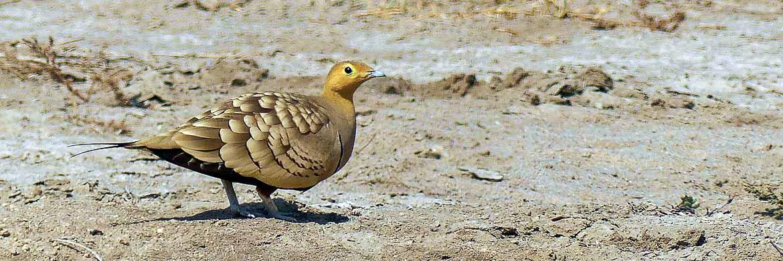 Rajasthan birding tour