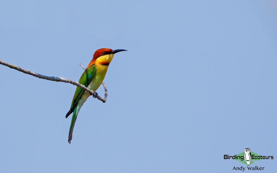 Andaman islands birding tours