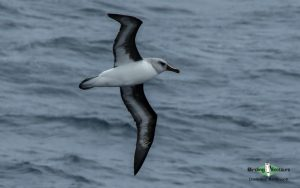 Antarctica birding galleries