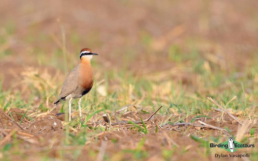Rajasthan birding tours