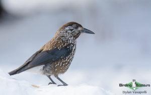 European birding galleries