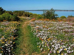 South African botanical tours