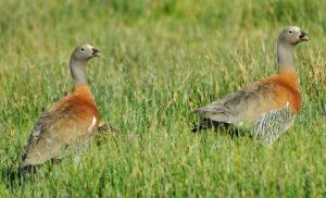 Ushuaia birding tours