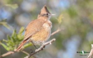 Argentina birding tours