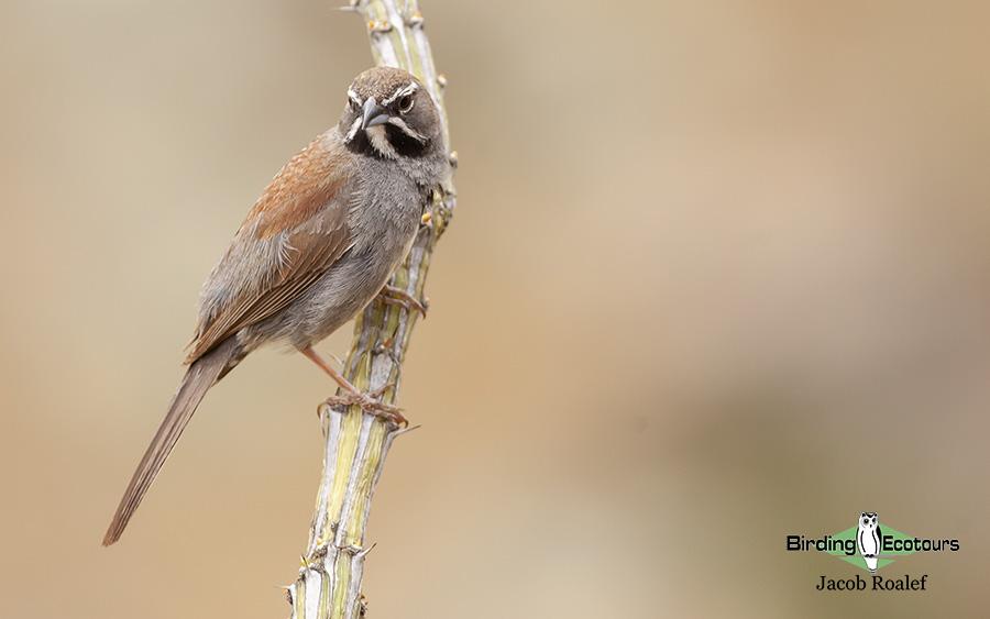 Arizona birding tours