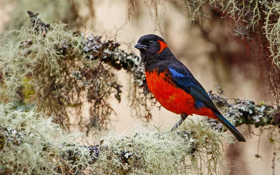 Ecuador day birding tours