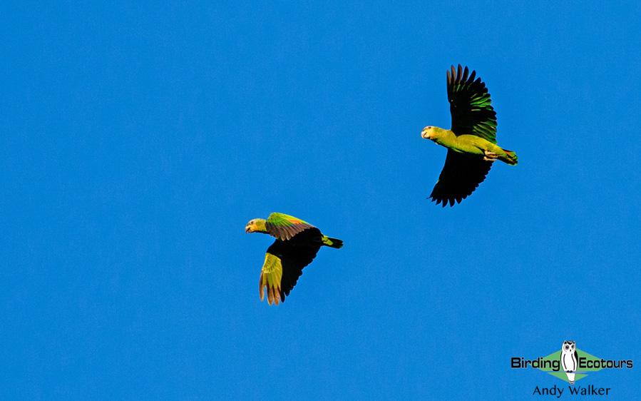Panama birding escape