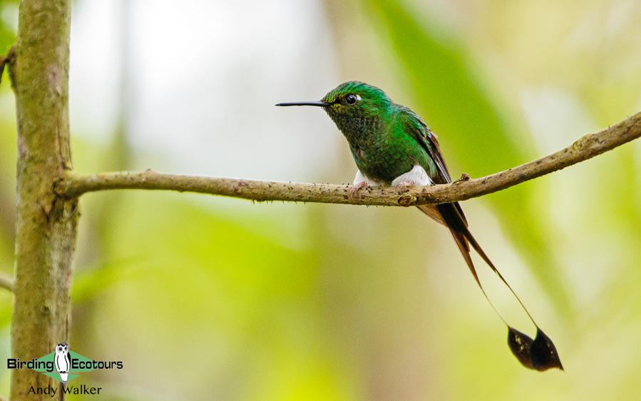 Ecuador birding