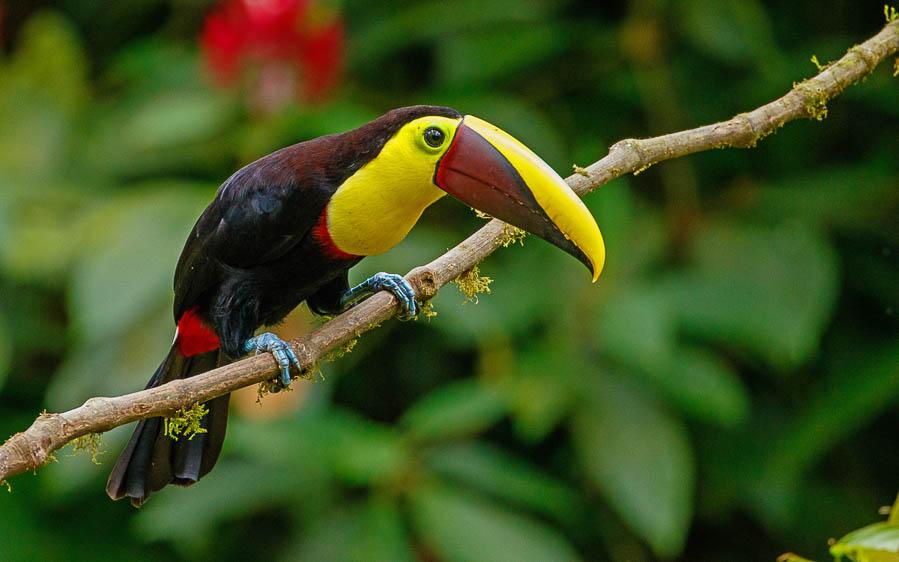 Panama escape birding tours