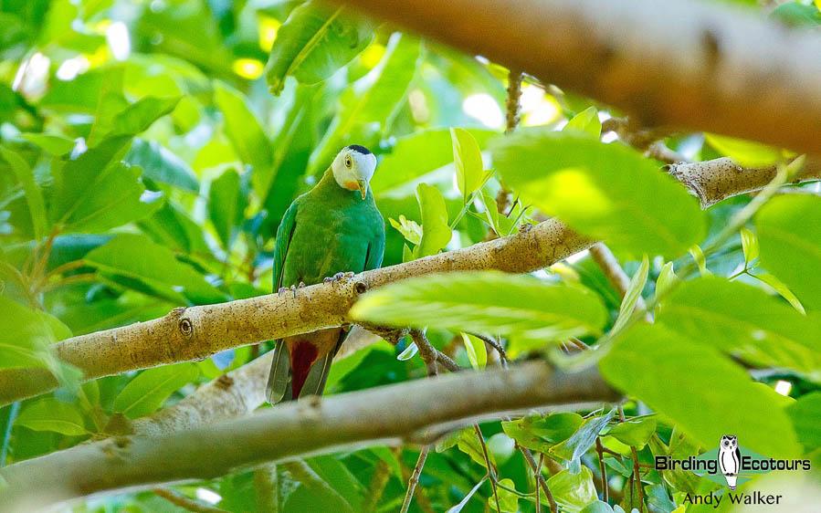 Sulawesi birding blog