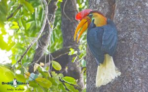 Indonesia birding tours