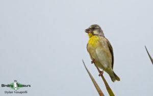 Subtropical South Africa birding tours
