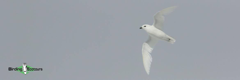 Birding Ecotours payments