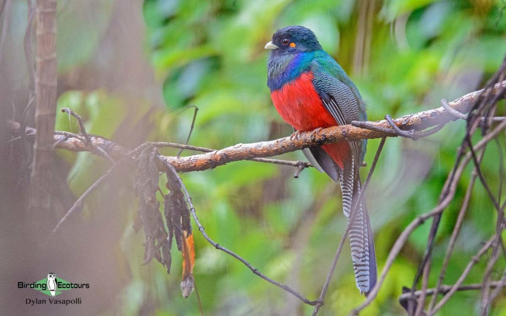 Best birding sites in Uganda