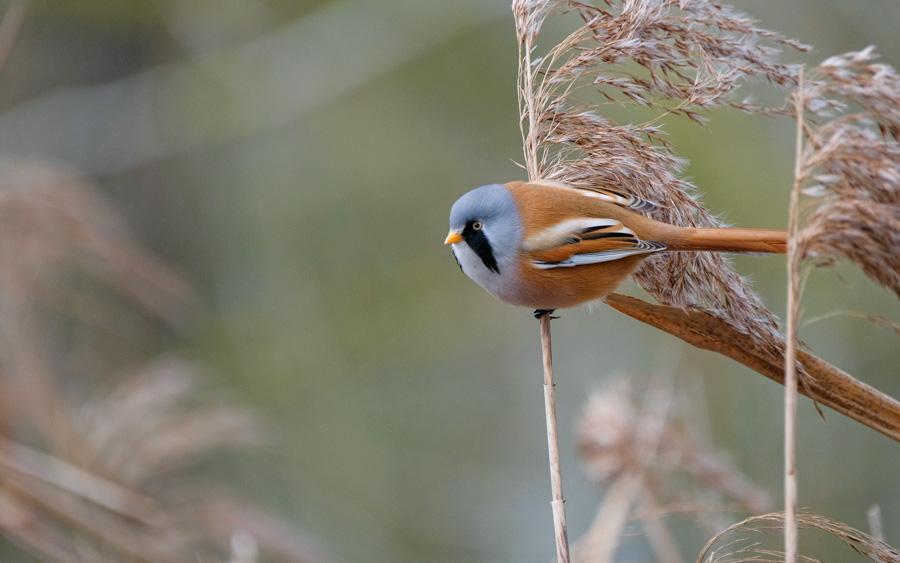 Norfolk Yare valley birding tours