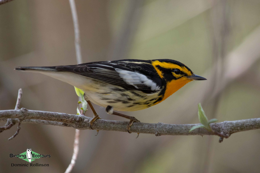 Top ten USA birds