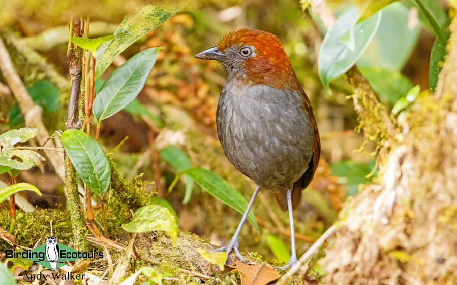 Best time for birding in Peru
