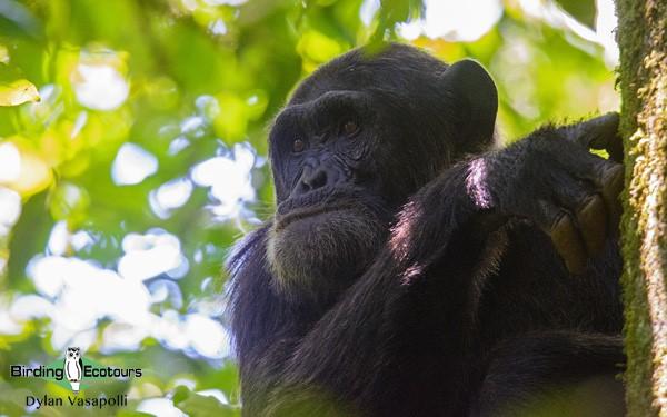 Best time for birding in Uganda