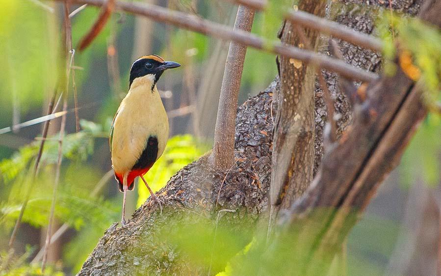 Lesser Sundas birding tour