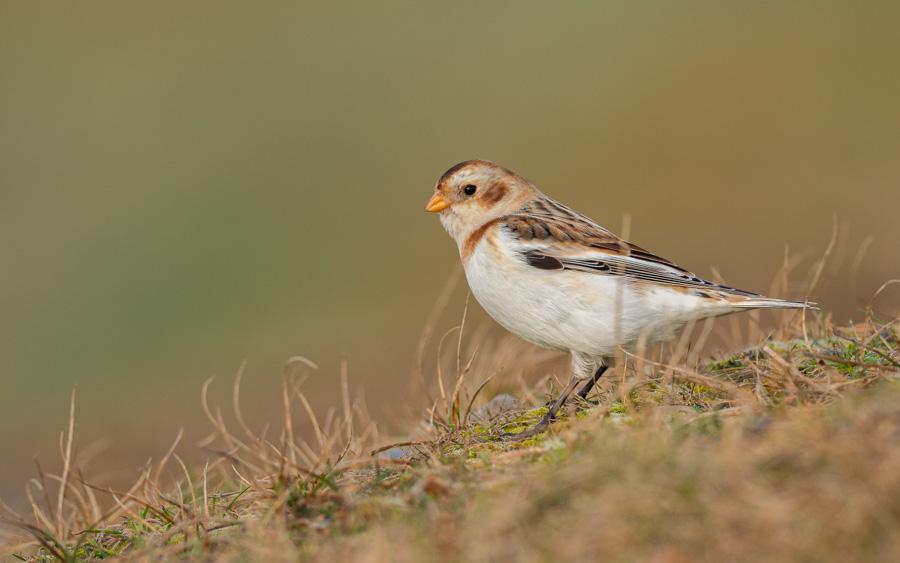 Norfolk coast birding tour