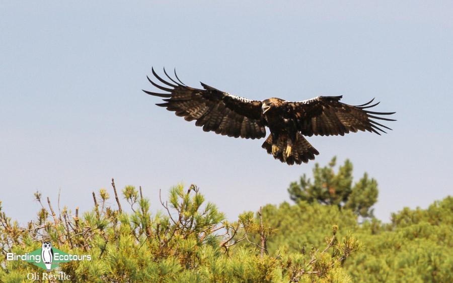 Spain birding tours