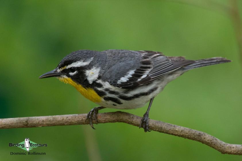 Top 10 birds of USA