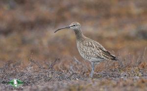 UK migrant trail 1-day birding tours