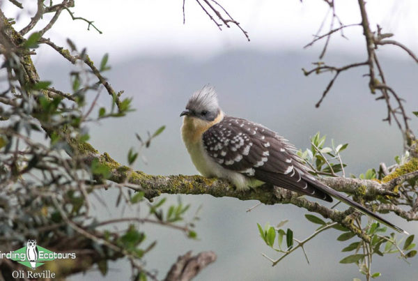 When to visit Spain for birding