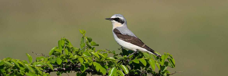 Norfolk Yare valley spring birding tours