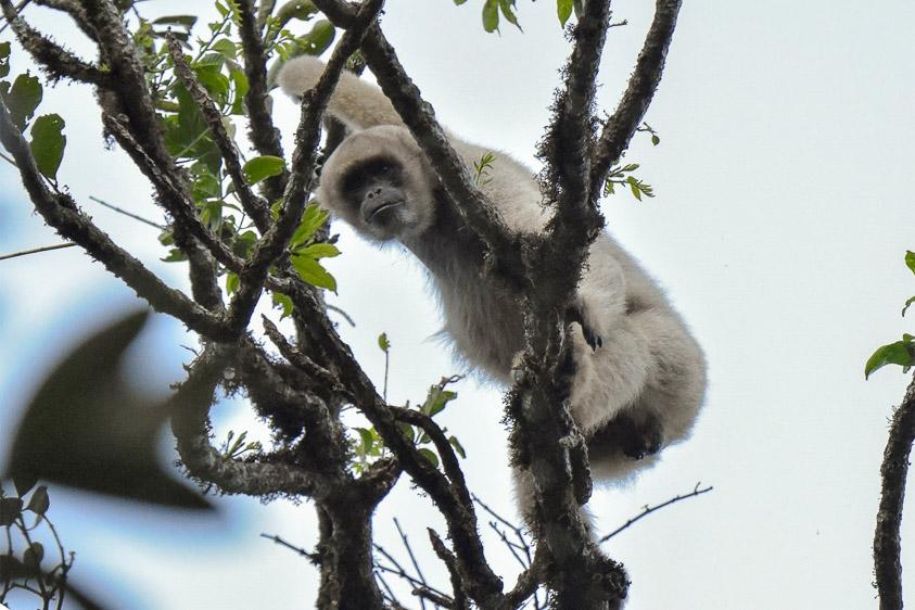 Brazil mammal blog