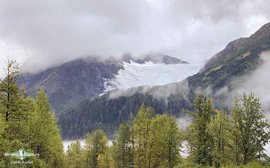 Alaska birding tours