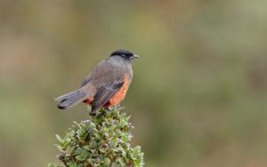 Colombia birding tours
